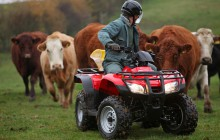 Honda ATV Cattle